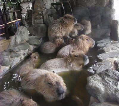 長崎バイオパーク カピバラ温泉 カピバラ風呂